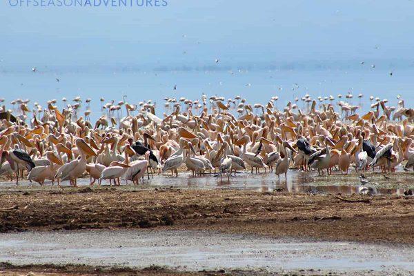 DT- Arusha National Park