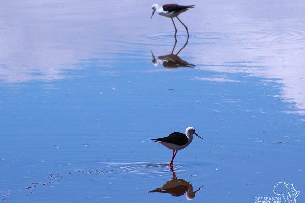 WildlifeWed_birds2