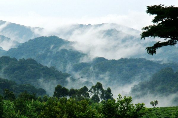 Bwindi-Impenetrable-National-Park1 (1)