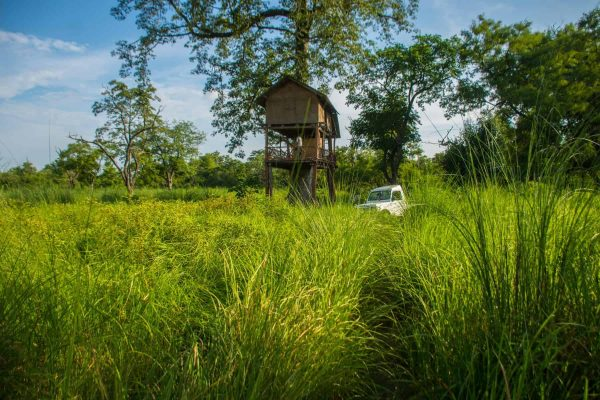 Tree house or Machan in Bardiya National Park