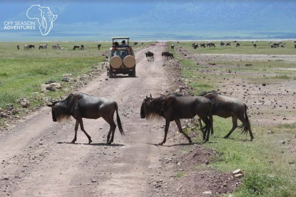 wildebeest crossing logo